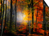 Light Colors Print by Philippe Sainte-Laudy