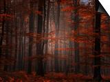 Philippe Sainte-Laudy - Oduševnělý les Obrazy