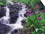 Waterfall and Wildflowers, Ouray, San Juan Mountains, Rocky Mountains, Colorado, USA Prints by Rolf Nussbaumer