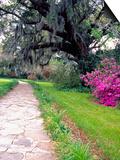 Pathway in Magnolia Plantation and Gardens, Charleston, South Carolina, USA Prints by Julie Eggers