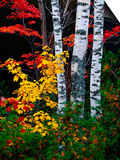 Fall Color, Old Forge Area, Adirondack Mountains, NY Poster by Jim Schwabel