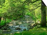 Afon Artro Passing Through Natural Oak Wood, Llanbedr, Gwynedd, Wales, United Kingdom, Europe Art by Pearl Bucknall