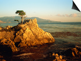 Lone Cypress Tree on Rocky Outcrop at Dusk, Carmel, California, USA Prints by Howell Michael