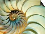 Close-up of Nautilus Shell Spirals Posters af Ellen Kamp