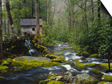 Watermill in Forest by Stream, Roaring Fork, Great Smoky Mountains National Park, Tennessee, USA Poster by Adam Jones