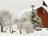 Red Barn in Fresh Snow, Whidbey Island, Washington, USA Prints by Trish Drury