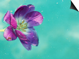 Flower Floating in Water Prints by April Bauknight