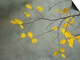 Yellow Autumnal Birch (Betula) Tree Limbs Against Gray Stucco Wall Posters by Daniel Root