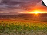 Italy, Umbria, Perugia District, Autumnal Vineyards Near Montefalco Art by Francesco Iacobelli