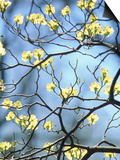 Branches of Spring Flowering Tree Posters by Steven Emery