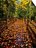 Boardwalk Full of Maple Leaves at Tahquamenon State Park, Michigan, USA Prints by Chuck Haney