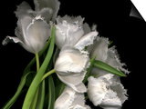 Frayed Tulips Prints by Magda Indigo