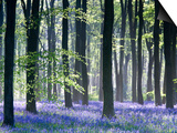 Bluebell Vision Prints by Doug Chinnery
