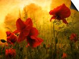 Philippe Sainte-Laudy - Aşkın Kırmızısı - Poster