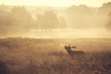 Call Prints by Mark Bridger