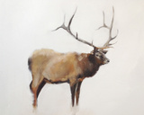 Elk Posters by Jacqueline Neuwirth