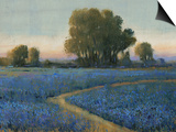 Blue Bonnet Field I Print by Tim O'toole
