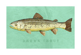 Brown Trout Print by John W. Golden