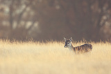 Small One Prints by Mark Bridger