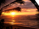 Sunset on the Ocean with Palm Trees, Oahu, HI Print by Bill Romerhaus