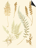 Fern Impressions IV Print by Henry Bradbury