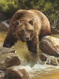 Grizzly at Roaring Creek Poster by Bonnie Marris