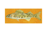 Walleye Posters by John Golden