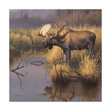 Bull Moose Print by Greg Alexander