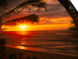 Sunset on the Ocean with Palm Trees, Oahu, HI Prints by Bill Romerhaus