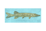 Northern Pike Prints by John Golden