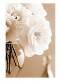Roses in Sepia Prints by Christine Zalewski