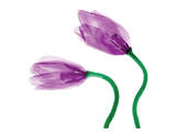 Delicate Purple Tulips Print by Richard Sutton