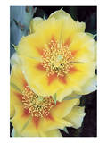 Prickly Pear 1 Posters by Danny Burk