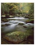 Jakes Creek Poster by Danny Burk