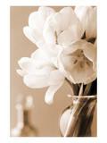Tulips in Sepia Affiche par Christine Zalewski