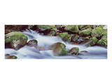 Smokies Roaring Fork Mossy Cascade, Great Smoky Mountains Poster by Danny Burk