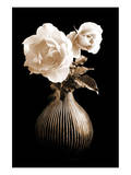 Lighted White Roses Posters par Christine Zalewski