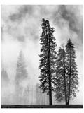 Yosemite Misty Pines Black and White Posters by Danny Burk