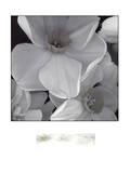 Narcissi for the Wedding II Kunstdrucke von Richard Sutton