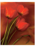 Tulip Fiesta in Red and Yellow II Prints by Richard Sutton