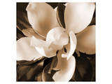 Magnolia Close Up I Prints by Christine Zalewski