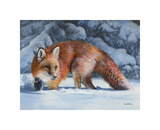 Fox at the Pines Giclee Print by Kevin Daniel