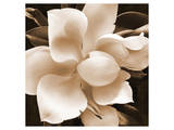 Magnolia Close Up II Print by Christine Zalewski