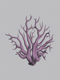Iridescent Coral I Prints by Maria Mendez