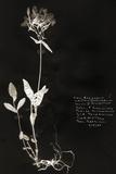 Botanical Collector II Affiches par Chris Dunker