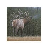 Broken Silence - Elk Giclee Print by Daniel Smith