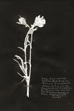 Botanical Collector IV Affiches par Chris Dunker