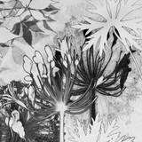 Agapanthus Impression II Giclee Print by Amanda Ross