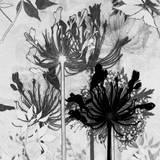 Agapanthus Impression I Giclee Print by Amanda Ross