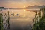 El lago de los cisnes Lámina giclée por Steve Docwra